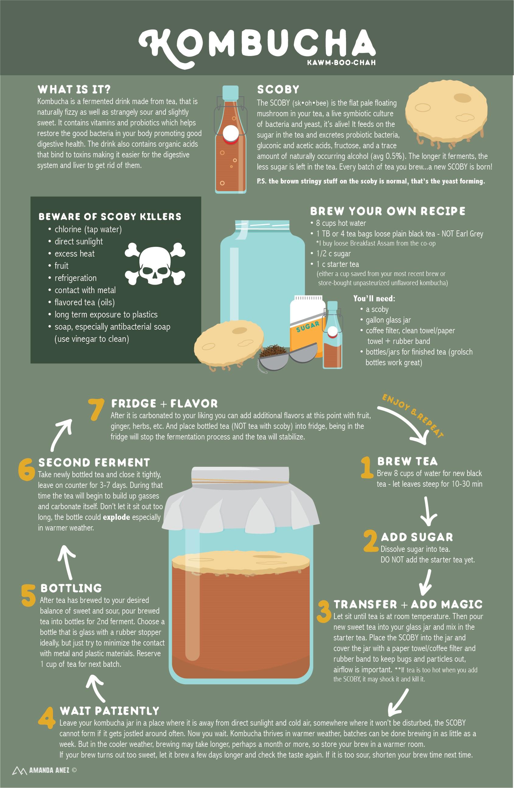 Kombucha infographic by Amanda Anez