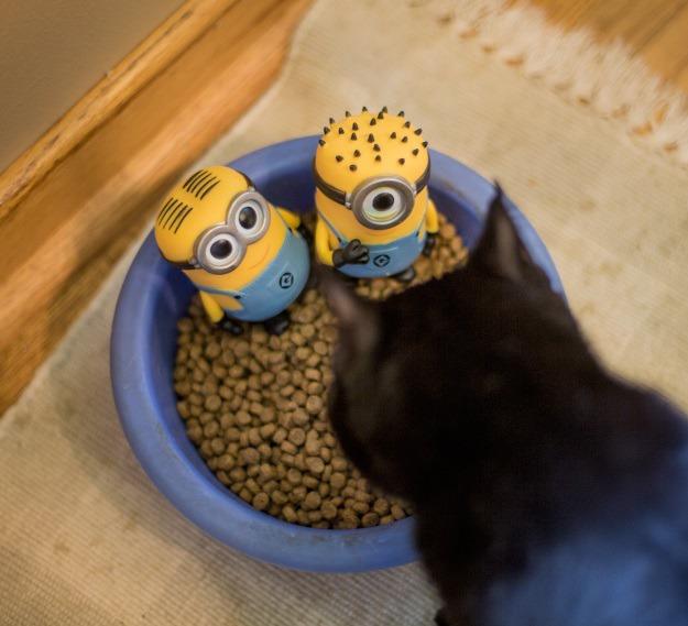 Minions in Cat Food