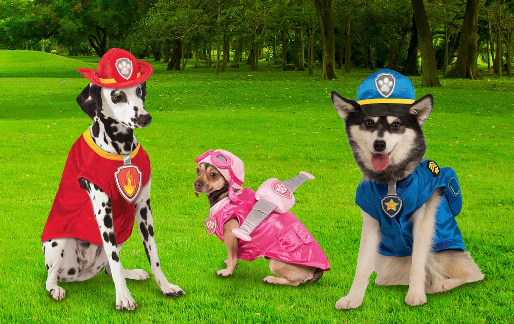 Best Paw Patrol Dog Costumes