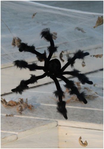 20 inch Poseable Black Spider