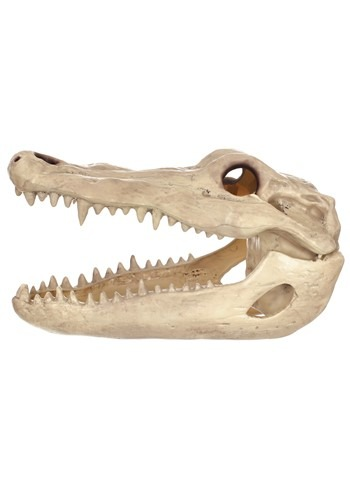 "13.5"" Alligator Head Skeleton Halloween Prop"