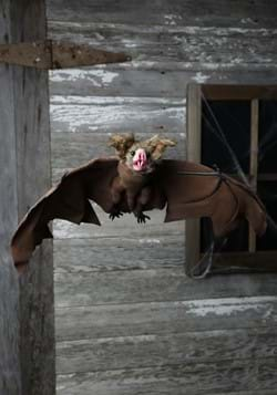 Brown Bat1